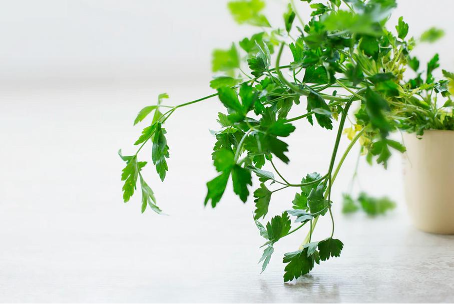 Mănâncă alimente care combat respirația urât mirositoare