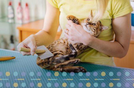 Când poţi tunde pisica şi care sunt cele mai cunoscute tunsori pentru pisic